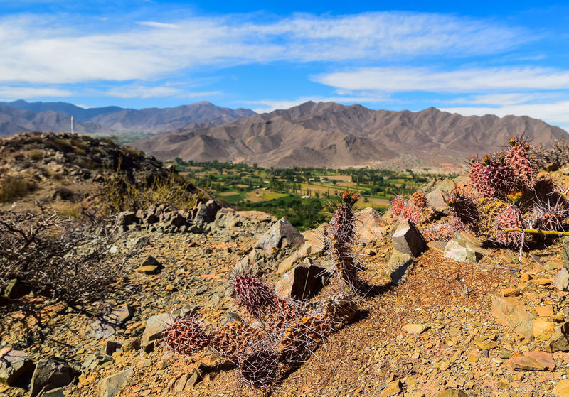 Mountain Valley Salta, Argentina Cachi, Salta Valles Calchaquíes No People Nature Naturaleza🌵🌻🎶 Cactus