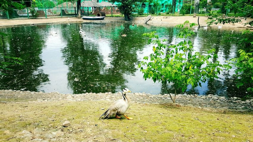 Day Outdoors Animal Themes Nature Animals In The Wild Water No People Reptile Animal Wildlife One Animal Tree Zoo Animals  Ponds
