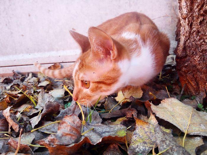 #littlecat #gatos Bsas Tiger Nature Leaf