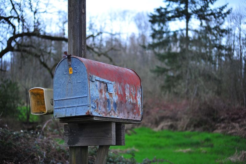 Close-up of mailbox on tree against sky