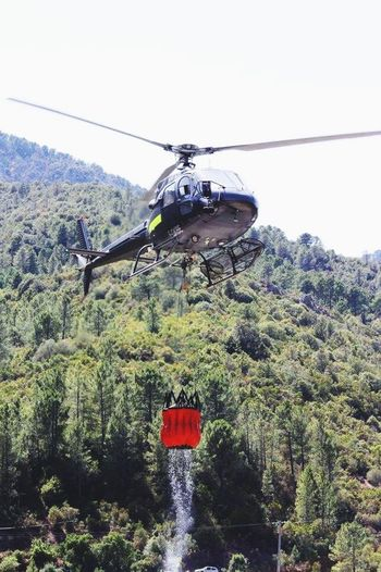 Transportation Tree Day Helicopter Outdoors Flying Nature No People EyeEm Gallery EyeEm Best Edits EyeEm Corsica Fiume Fango Incendio Vigili Del Fuoco  Elicottero Soccorso