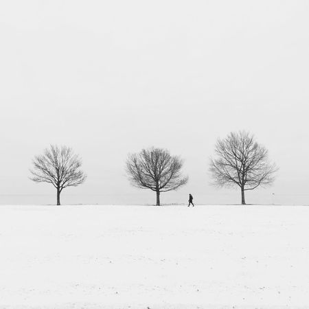 Bare Tree Beauty In Nature Branch Cold Cold Temperature Day Landscape Lone Nature One Person Outdoors People Sky Snow Snowing Tree Weather Winter Fresh On Market 2018