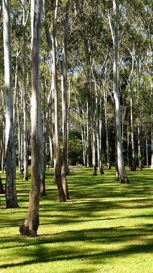 Trees on landscape