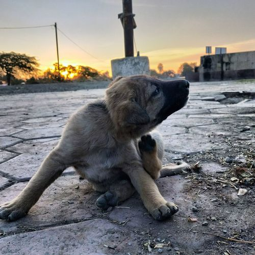 Dog sitting in a city