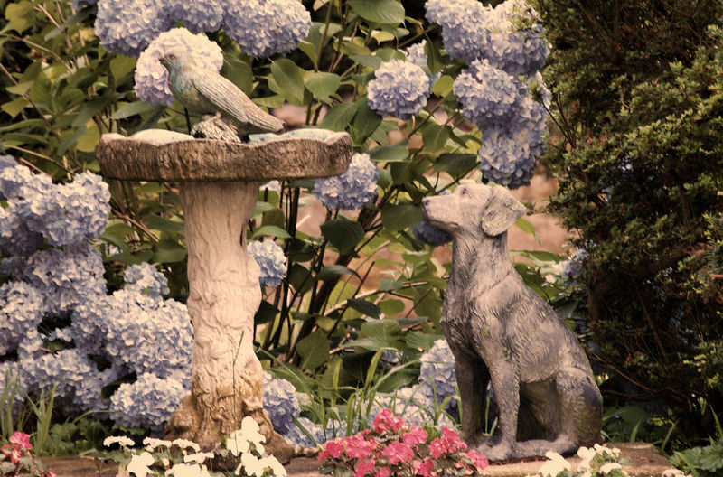 Dog And Bird In The Garde Beauty In Nature Close-up Day Flower Flower Head Fragility Growth Nature No People Outdoors Plant Tree