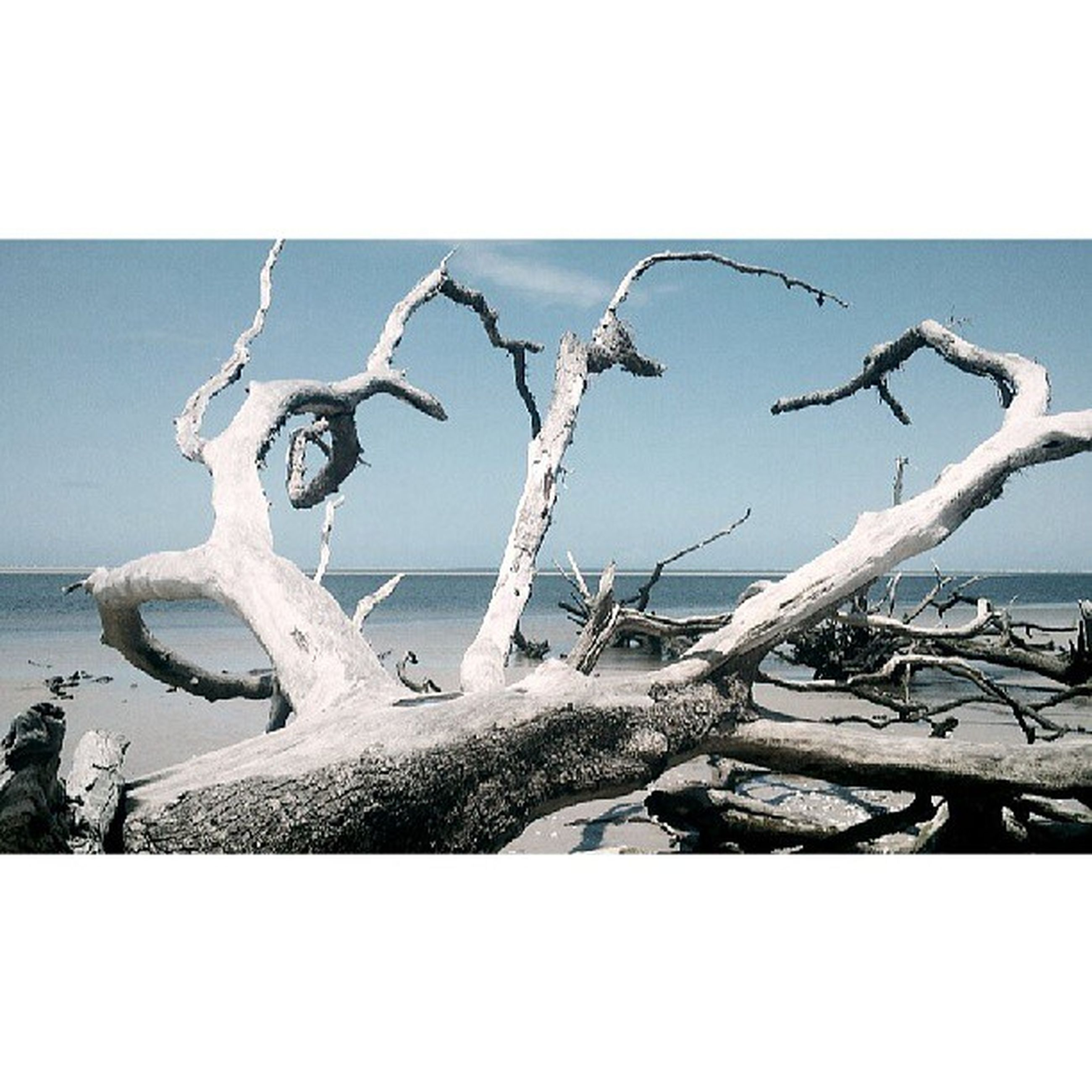 transfer print, auto post production filter, sea, nature, day, water, outdoors, no people, close-up, sunlight, tranquility, beach, sky, damaged, abandoned, branch, plant, clear sky, broken, wood - material