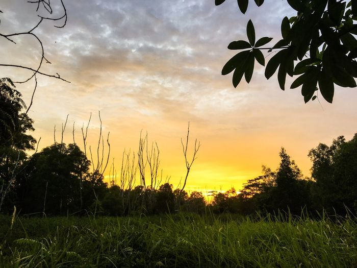 The Great Outdoors - 2016 EyeEm Awards Sunrise Sunset Sunshine Landscape Forest Sun Wild Wilderness