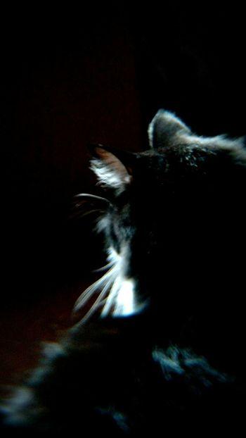 Black Cat Cats EyeEm Best Edits Lens Blur Silhouette Black Cat