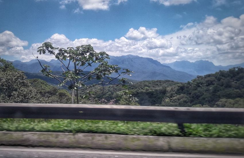 Serra do Mar Paraná Serra Do Mar Mata Atlântica Brazil Nature Nature Photography Nature_collection Sky Montains    Montain  EyeEmNewHere Tree Mountain Flower Rural Scene Sky Mountain Range Landscape Cloud - Sky Summer Exploratorium Visual Creativity