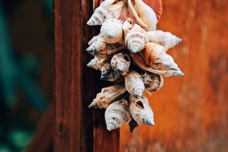 Directly above shot of shells on wood