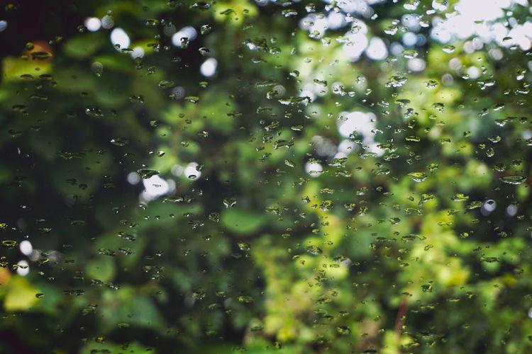 Dreaming Green Rain Raindrops Bokeh Full Frame Summer Window