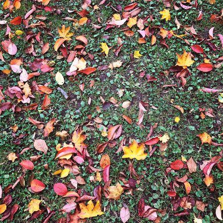 Fall is in full swing!! Autumn Leaves Nature Fall Walkinthepark Sapporo Hokkaido