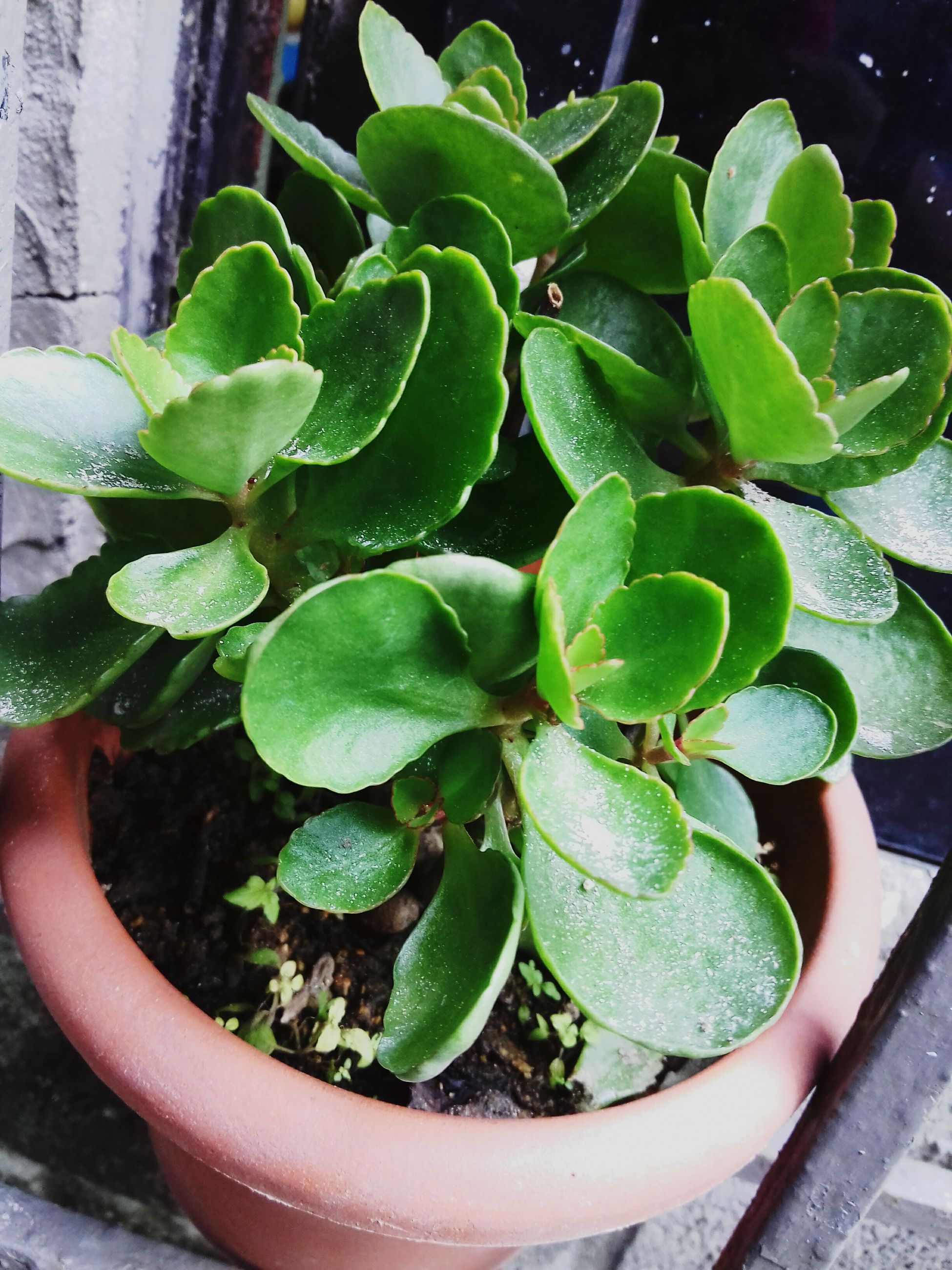leaf, plant, growth, green color, potted plant, high angle view, freshness, nature, close-up, flower, fragility, beauty in nature, growing, water, front or back yard, day, outdoors, green, botany, cactus
