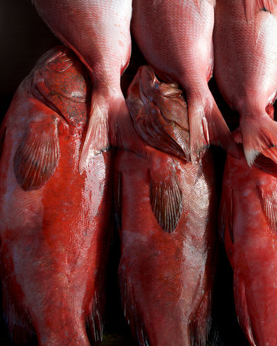 Coral trout or queen snapper. rd fish close up.