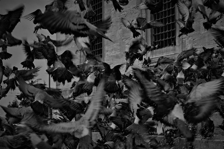 View of birds in city