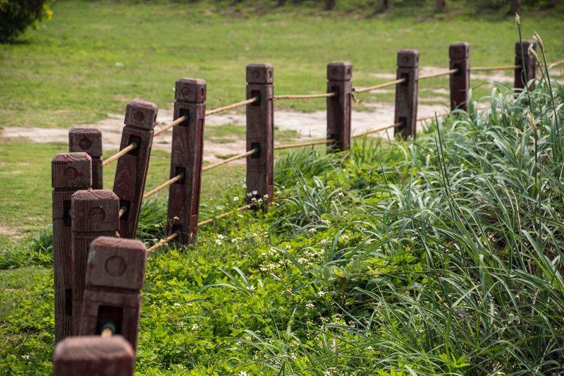Grass Plant No