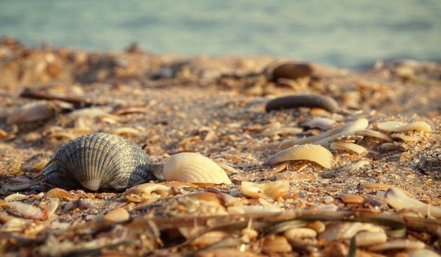 Sea Life Sea