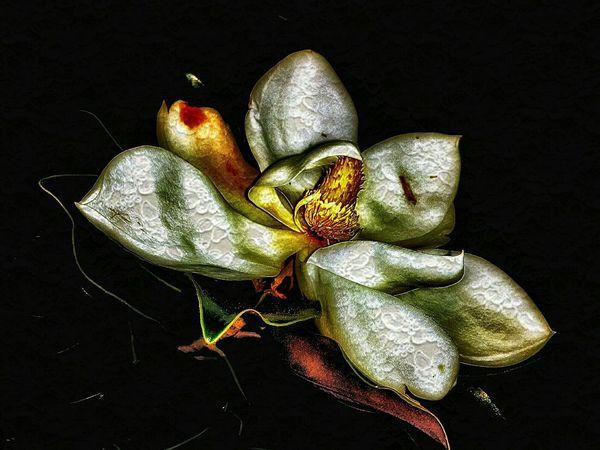 Re Edit/re Post Texture Zen Flower Flowerporn