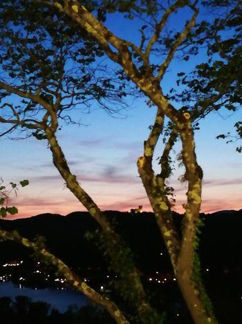 Lasciatemi qui ... non si può volere altro. Tree Nature No People Outdoors Silhouette Plant Sunset Tranquility My Favorite Place Myparadise