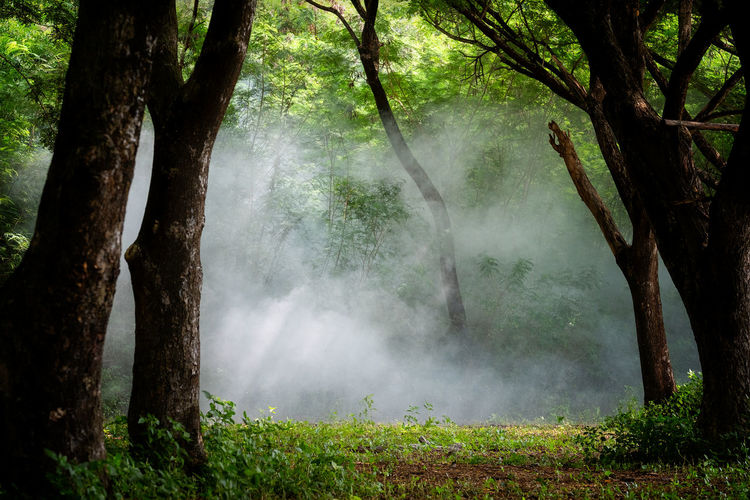A beautiful foggy forest ,Light in a tree forest Tree Plant Tree Trunk Trunk Forest Land Nature No People Day Scenics - Nature Tranquility Beauty In Nature Fog Outdoors Non-urban Scene Environment WoodLand Landscape Growth