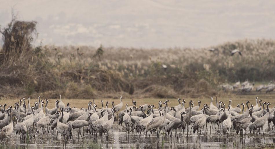 Gray herons perching in lake against sky