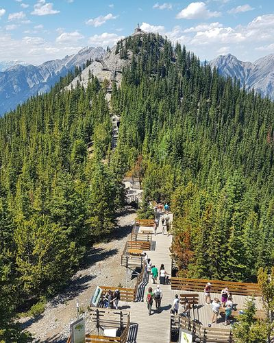 Sulphur Mountain, Banff , Canada #NoFilter #photography #Canada #throwback #Nature  #EyeEmNewHere #likeforlike #likemyphoto #qlikemyphotos #like4like #likemypic #likeback #ilikeback #10likes #50likes #100likes #20likes #likere #banffnationalpark #banff #EyeEmSelects #EyeEm Nature Lover #eyeemphotography #eye4photography # Photooftheday #mountains #hiking #tranquillity #travelphotography #eyembestshot #Canada #gettyimage Agriculture Field High Angle View