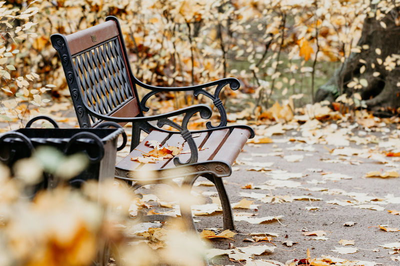 Autumn Seat Plant Part Leaf Selective Focus No People Day Nature Change Plant Absence Eyeglasses  Dry Outdoors Glasses Empty Close-up Land Falling Chair Leaves