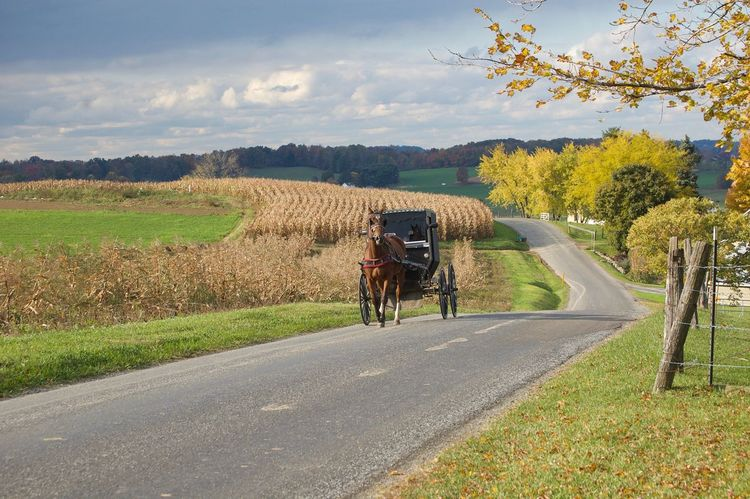 Enjoying Life Autumn Rural Scene The Way Forward Fall Leaves Road (null)Transportation Horse Cart Outdoors Beauty In Nature