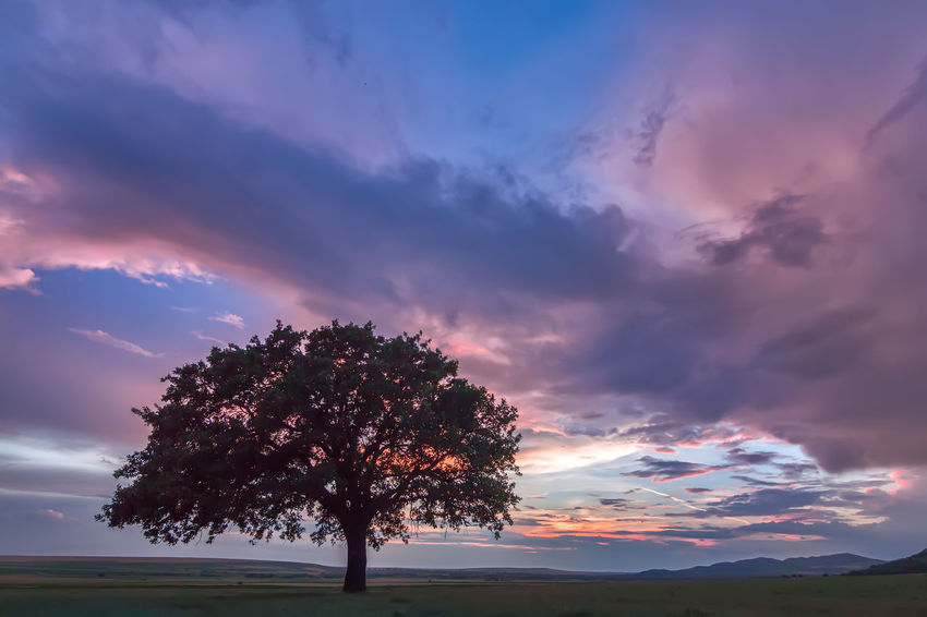 Bright Dramatic Sky Loneliness Rural Silhouette Weather Beauty In Nature Cloud - Sky Colorful Countryside Dusk Environment Evening Field Horizon Landscape Meadow Oak Tree Orange Color Outdoors Scenics - Nature Season  Solitude Sunrise Sunset