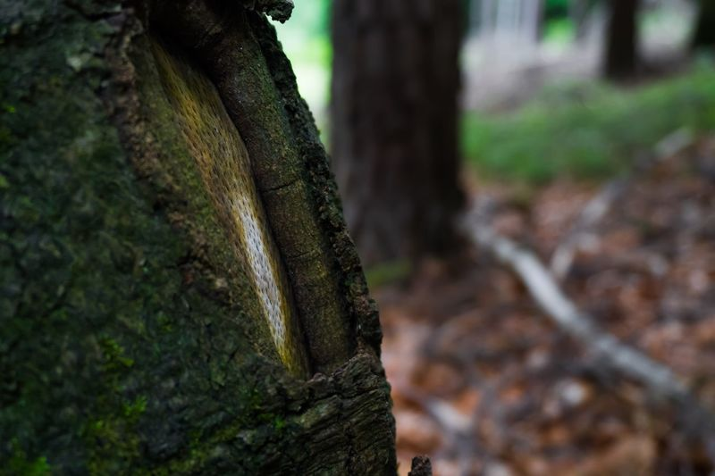 Close-up of tree trunk