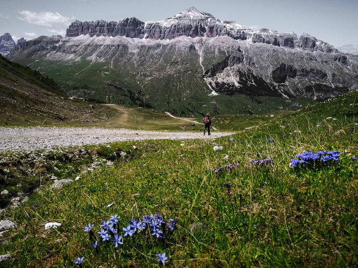 Scenic view of flowering plants on land against mountains