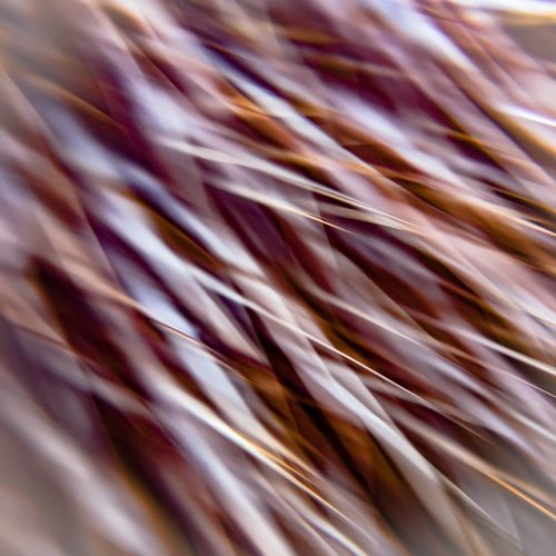 Abstract play Abstract Art Fine Art Photography Contemporary Photography Feline Fur Smartphone Lens Clip Close-up Texture No People