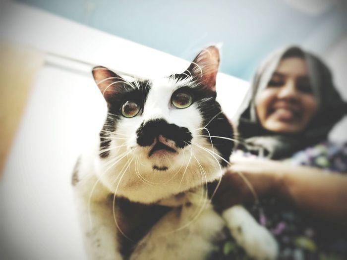 Charlie Chaplin kind of moustache. Pets Domestic Animals Domestic Cat Portrait Mammal Day Veterinary Cat Cats Of EyeEm One Animal Feline Companions Feline Photography,