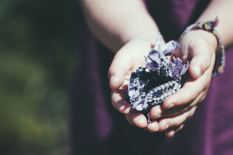 Close-up Day Hands Holding Human Body Part Human Hand Lavenderflower Nature One Person Outdoors People