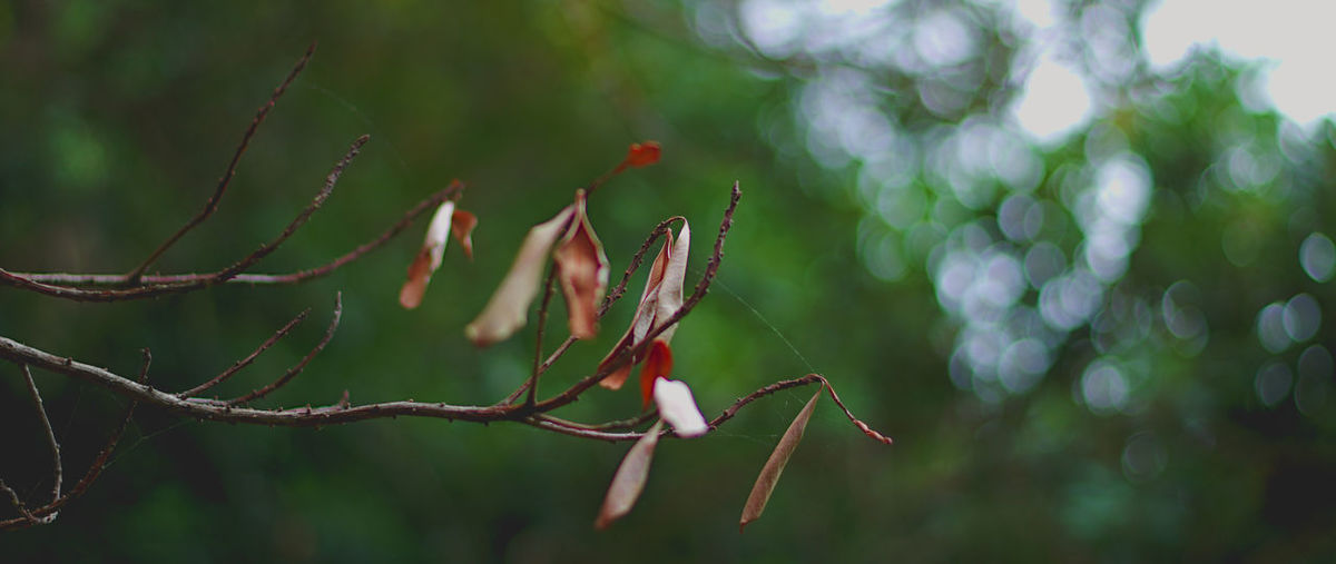 Close-up of leaves on branch