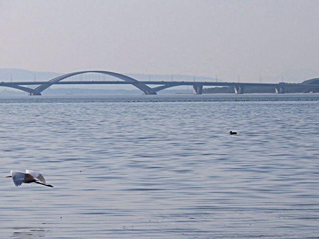 Bird Birds Flying Flyingbirds Sea Seaside Sea And Sky Sea View Bridge Sea_collection