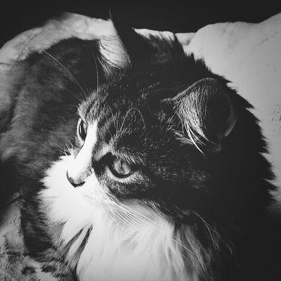 Cat Kyra