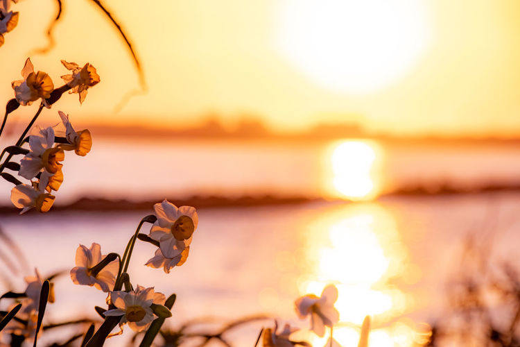 Close-up of plant against sea during sunset