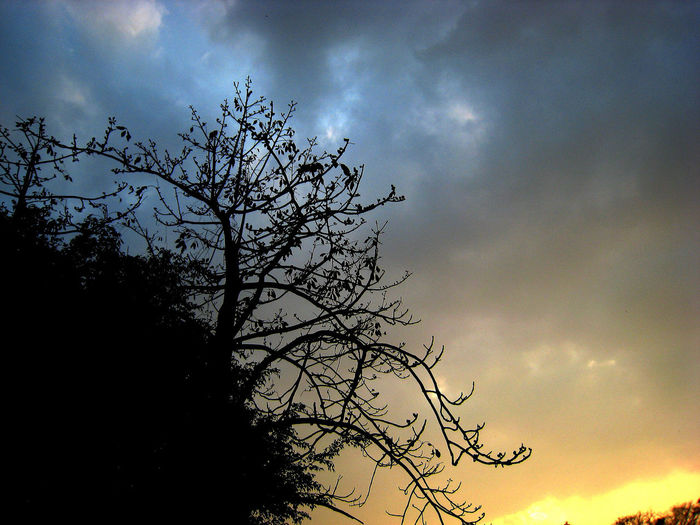 Silhouette Sunset Tree Branch Sky Bare Tree Outdoors Back Lit