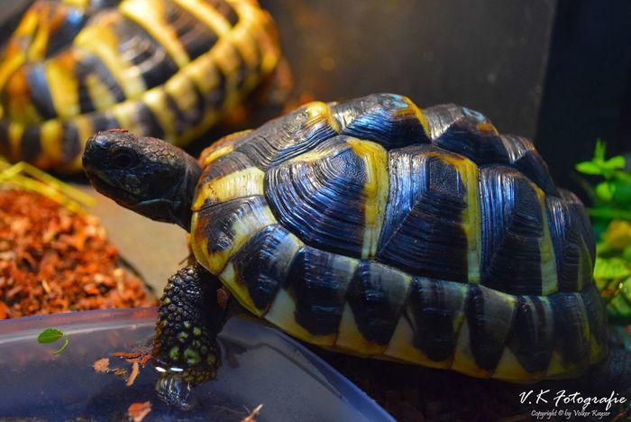 Terrarium Terrarium🍀 Reptilien Reptiles Reptile Turtle 🐢 Turtles Turtle Schildkröten  Schildkröte One Animal Animal Themes Animals In The Wild