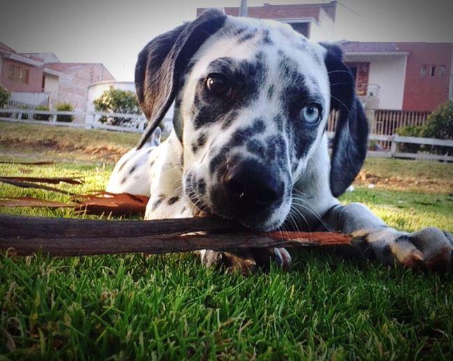Best Dog 🐶🐶🐶🐶🐼🐼🐼🐼🐼
