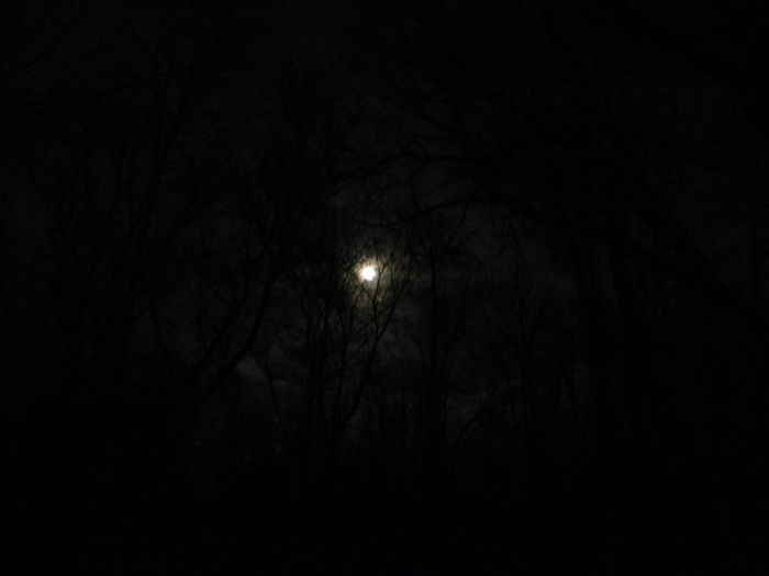 Astronomy Beauty In Nature Branch Bright Night Dark Full Moon Haunted Haunted Woods Illuminated Low Angle View Moon Moon Moon Light Moonlight Nature Night No People Outdoors Scenics Sky Sky And Clouds Supermoon Tranquil Scene Tranquility Tree