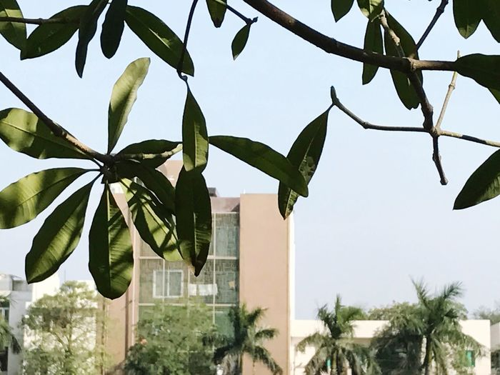 Leaf Growth Green Color Day Tree Low Angle View Outdoors Sky Building Exterior Architecture