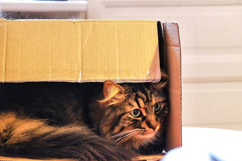 Close-up of cat lying in cardboard box at home