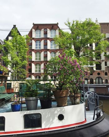 Amsterdam Amsterdam Canal Amsterdamcity Amsterdamse Grachten Architecture Building Exterior Canals Canals And Waterways City City Life Cityscape Cityscapes Day Flowers Green Greenery Houseboat Houseboats In Amsterdam Nature No People Outdoors Plants Plants And Flowers