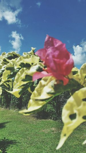 Flowers Relaxing Guadeloupe Sun ☀ 🌷 Flowers 🌹 Oklm Prodbyjorryphotographie
