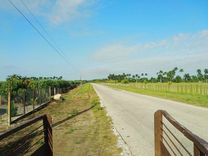 Green Rural
