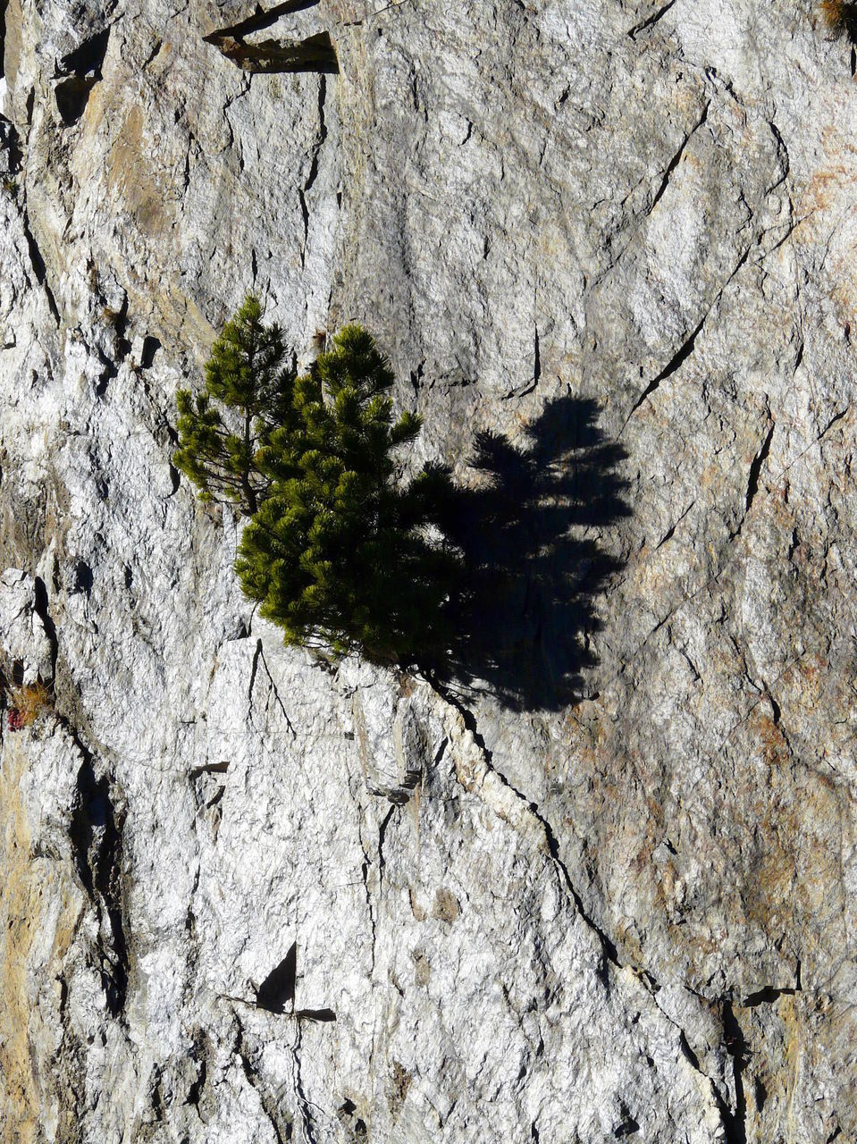 textured, nature, no people, day, growth, tree, close-up, outdoors, animal themes