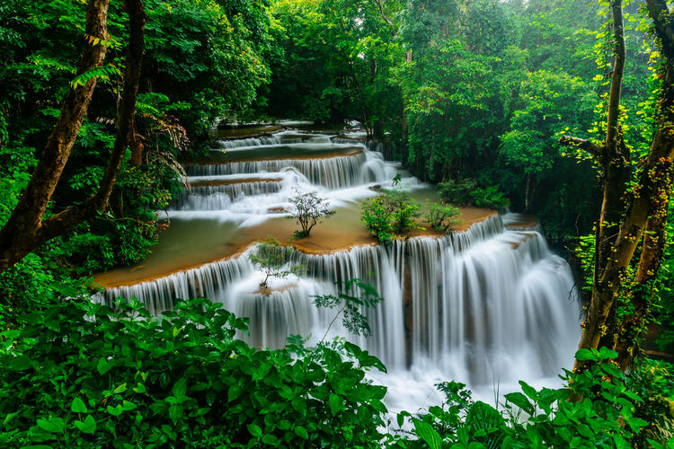 beautiful waterfall in green forest Tree Water Waterfall Forest Leaf Beauty Social Issues River Long Exposure Motion Rainforest Tropical Rainforest Power In Nature