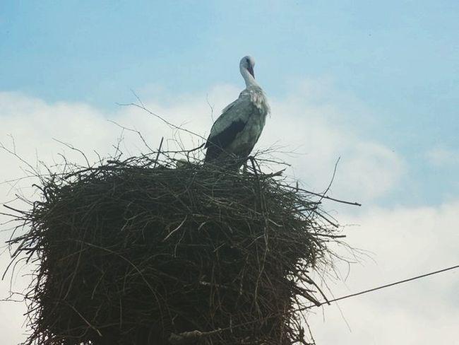 Belarus Animal Wildlife Sky Nature Animals In The Wild Mogilev Belarusian Nature Slavic Slaves Bird